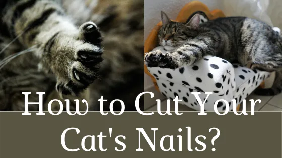 Pin On Cats And Kittens Care