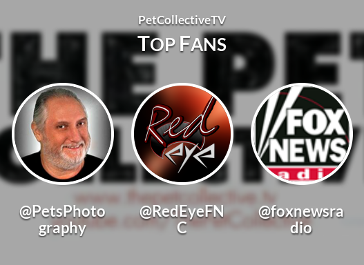 <3 @PetCollectiveTVs Top Fans - Red Eye is #2 (We want a recount)