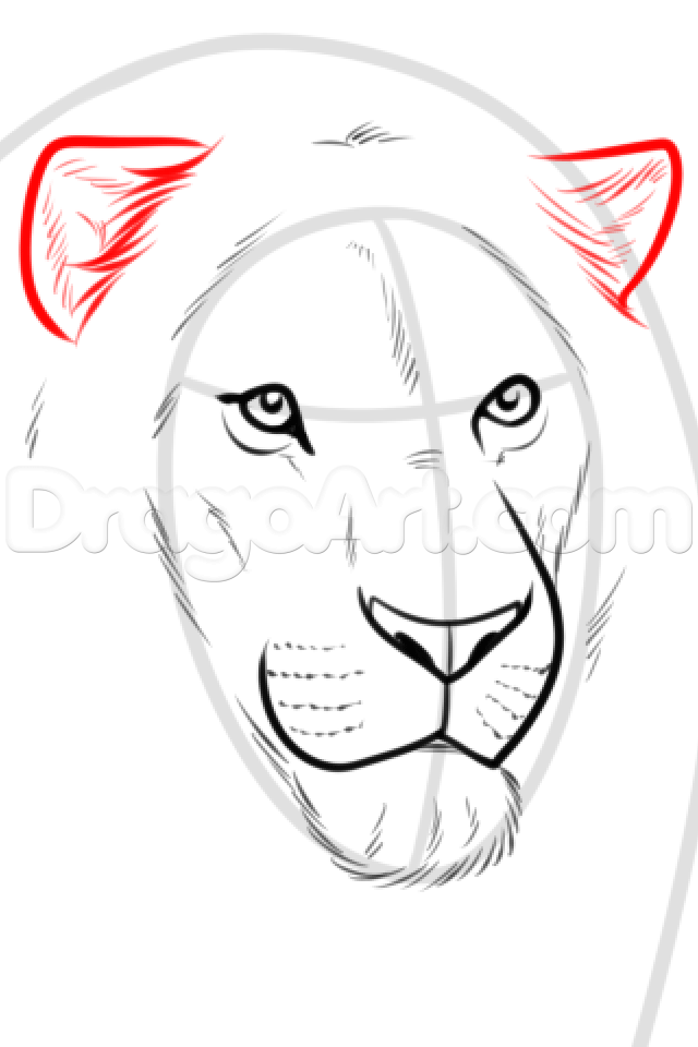 Drawing A Realistic Lion Step