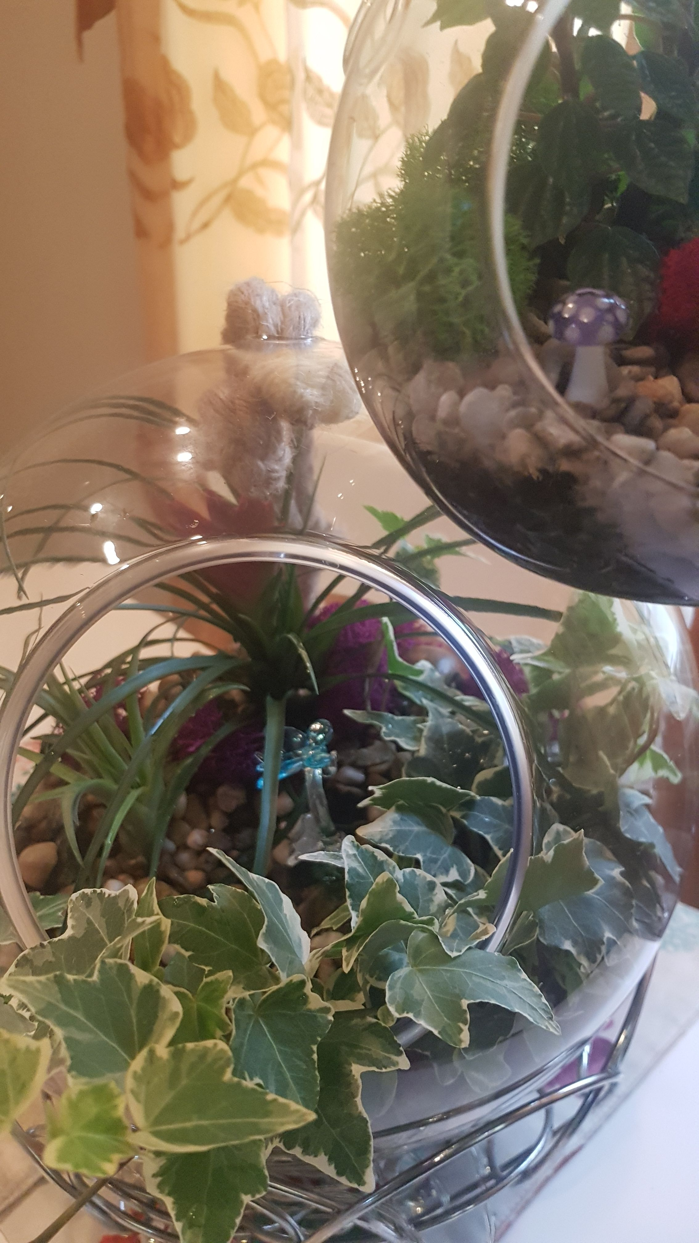 Hanging terrariums of all sizes order today or call to build your