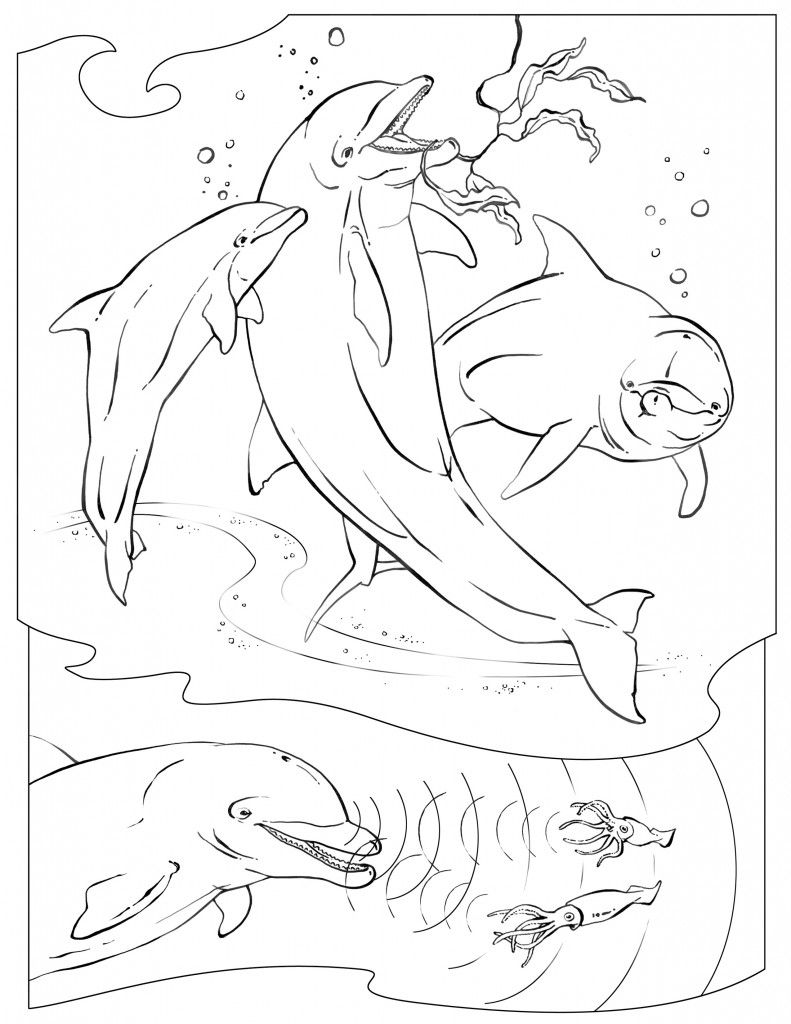 Amazing Dolphin Realistic Coloring Pages Printable Enjoy Coloring Dolphin Coloring Pages Ocean Coloring Pages Animal Coloring Pages