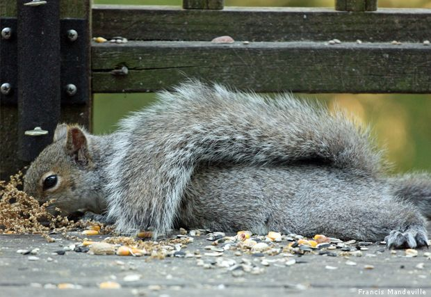 Napping in the park.
