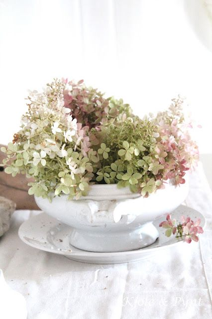 Alte Suppenterrine Mit Rispenhortensie Auf Seidenfein Blogspot Com Beautiful Flowers Hydrangea Colors Hydrangea Paniculata