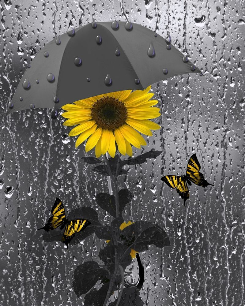 Yellow gray wall art sunflower butterflies bathroom for Wall decor for yellow walls