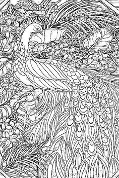 Coloring page peacock Animal coloring pages Adult