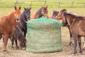 Slowfeeding Powolne Karmienie Koni Karmienie Z Siatki Na Siano Horse Nutrition Equestrian Life Paddock Paradise