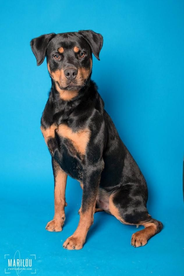 Adopt Chico On Dogs Pets Animals