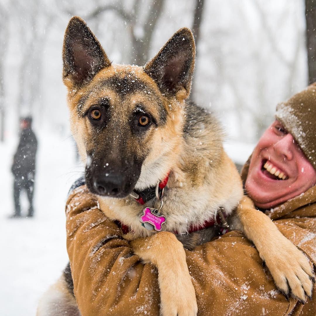 GSDJune German shepherd, Nyc dogs, Dogs