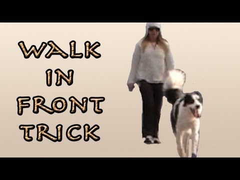 Train Your Dog To Walk In Front Of You For A Canine Freestyle