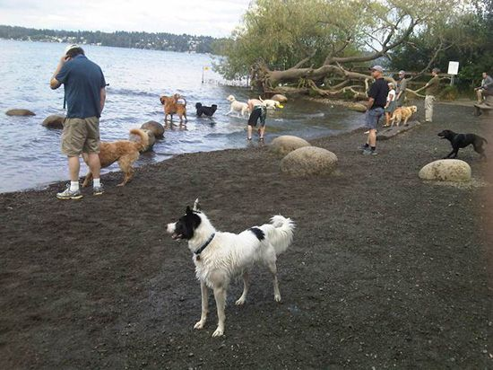 Magnuson Park Off Leash Dog Park A Million Cool Things To Do Seattle Seattle Dog Seattle Photos Dog Park