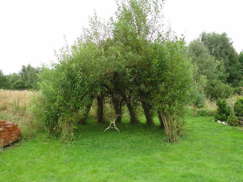Altanka Z żywych Wierzb Ogród Garden Plants