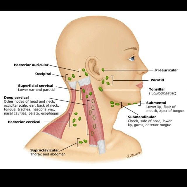 Lymph nodes | anatomy & physiology | Pinterest