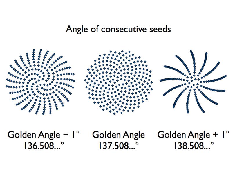 Sunflower-seed-golden-angle-diagram.001 | Pinterest | Sunflower ...