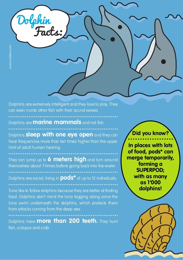 Dolphin facts | Nerdy side☆ | Dolphin facts, Dolphins ... - photo#45