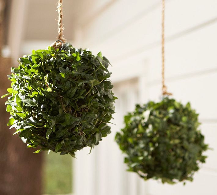 Live Ivy Kissing Ball Pottery Barn Hanging Succulents