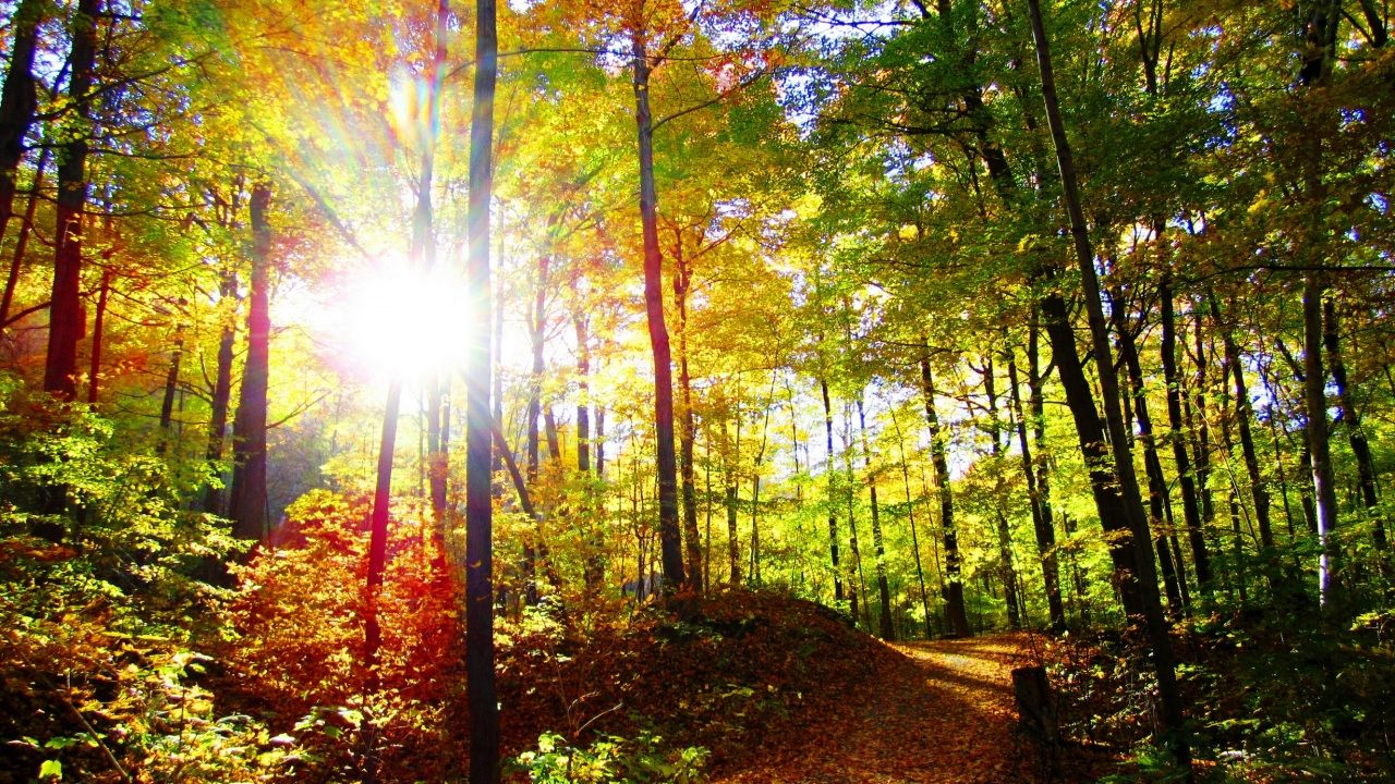 Wallpapers Forests Autumn Trees Sun Trail Rays Of Light Nature Free Desktop Photo 354170 View Wallpaper Beautiful Forest Autumn Trees Wallpaper rays of light trees autumn