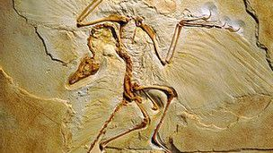 Fossil do Archaeopteryx