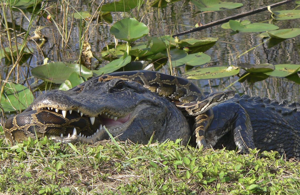 Beware Of Florida Gators D I M Not Talking About The