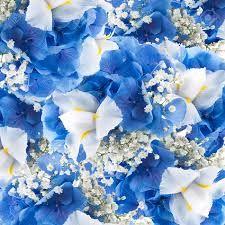 Risultati immagini per iris bianco