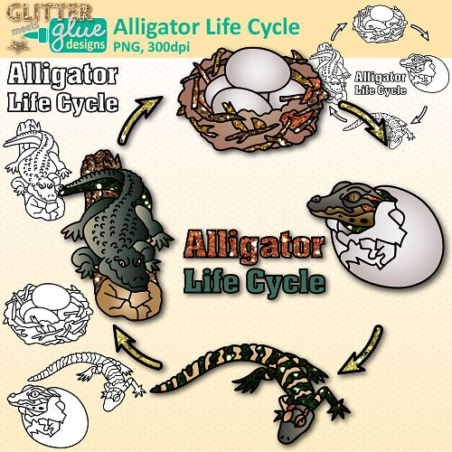 Alligator Life Cycle Clipart Animal Group Graphics Glitter Meets Glue Life Cycles Animal Life Cycles Science Clipart