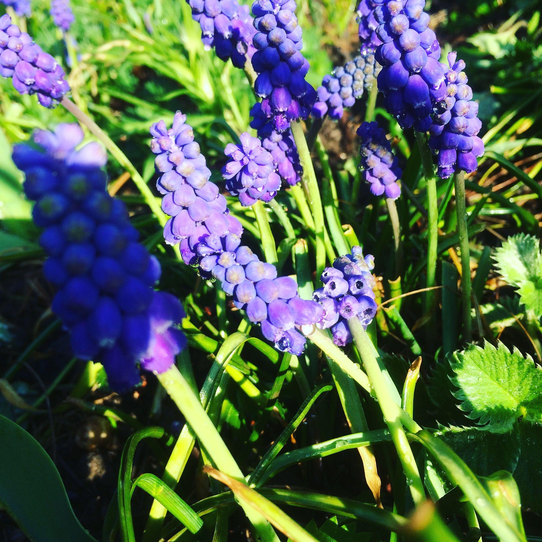 pin von nicole auf frühlingsblumen flowers in spring