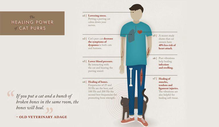 Katze Blutdruck Senken