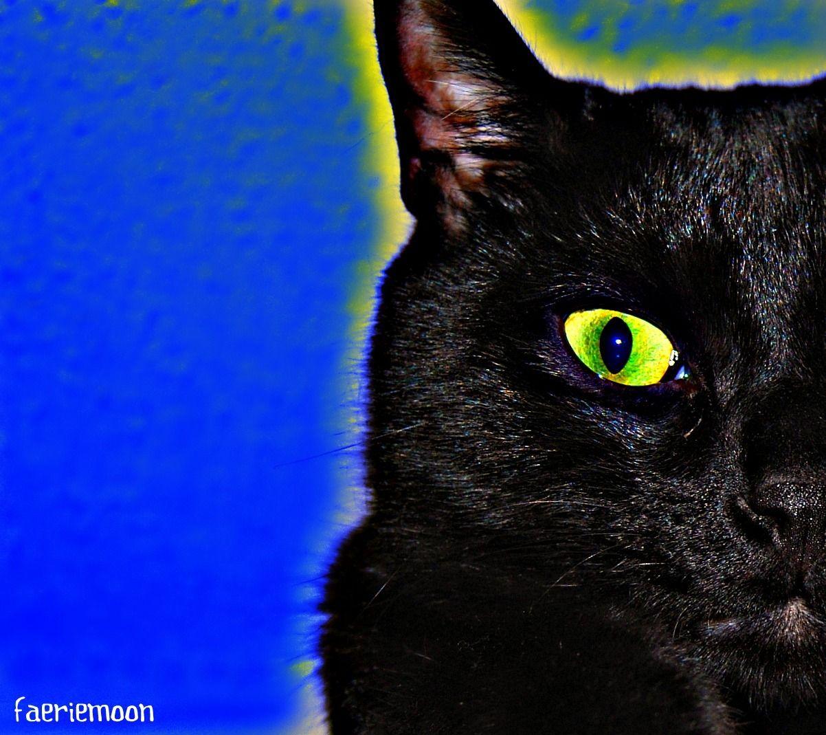 Aura Noir #cats #blackcats #photography by Clarissa Johal