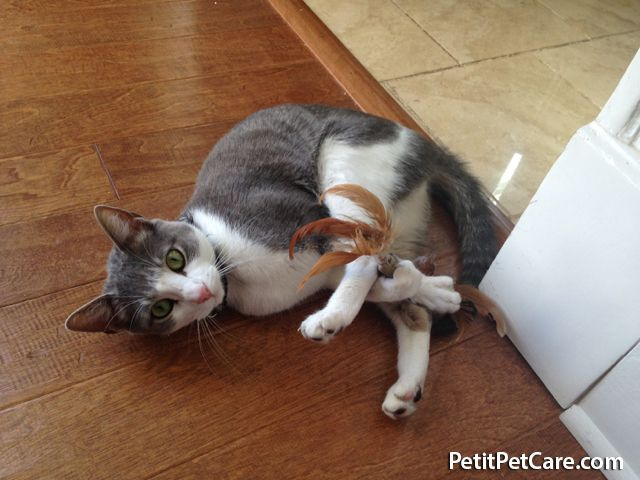 Sonny Showing Off His Flexibility While Playing With His Feather Toy Pet Care Furry Friend Your Pet