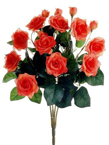 15 Rose Bush X10 Coral Pack Of 12 Click On The Image For