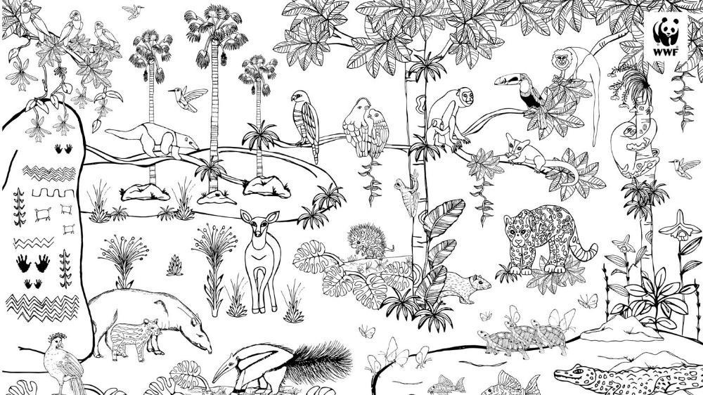 mach den regenwald bunt  malvorlagen ausmalen blumen