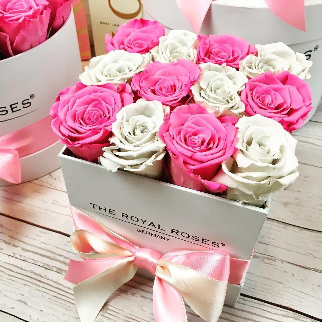 The Royal Roses Rosenbox Pflanzen Wohnklamotte Rosen
