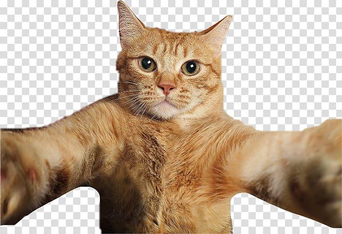 Brown Cat Illustration Cat Selfies Pet Cat Transparent Background Png Clipart Cat Illustration Brown Cat Cats