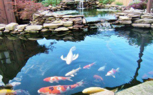 Kolam Ikan Penyeri Landskap Harian Metro Ponds Backyard