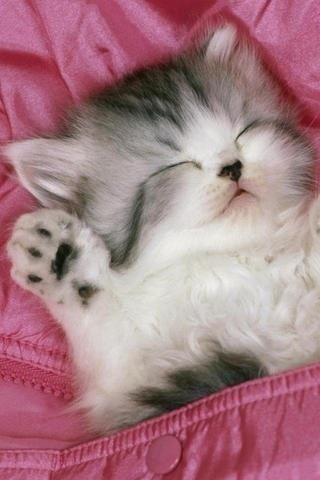 Pin By Katie Moore On Funnies And Cuties Kittens Cutest Cute Cat Wallpaper Sleeping Kitten