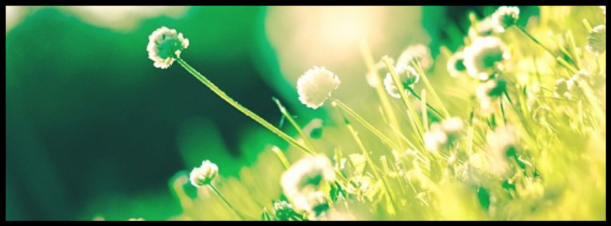 Dandelions And Grass Nature And Beauty Facebook Cover Photo Fb Covers Facebook Cover Photos Cover Photos Facebook Cover Quotes