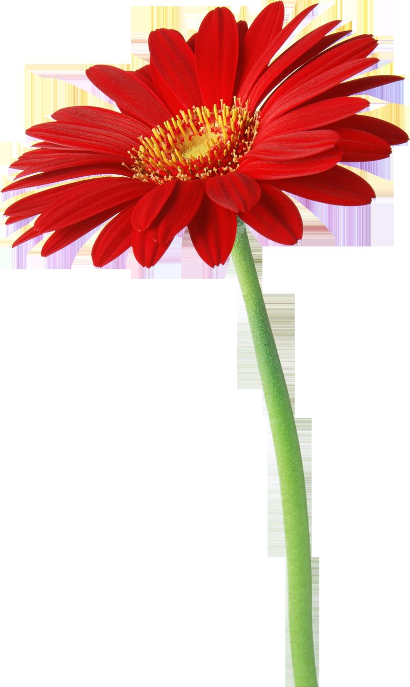 Flores Naturales Natural Flowers Flores Pinterest Flower