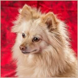 Adopt Zena On Dog Adoption Animal Welfare League Dogs