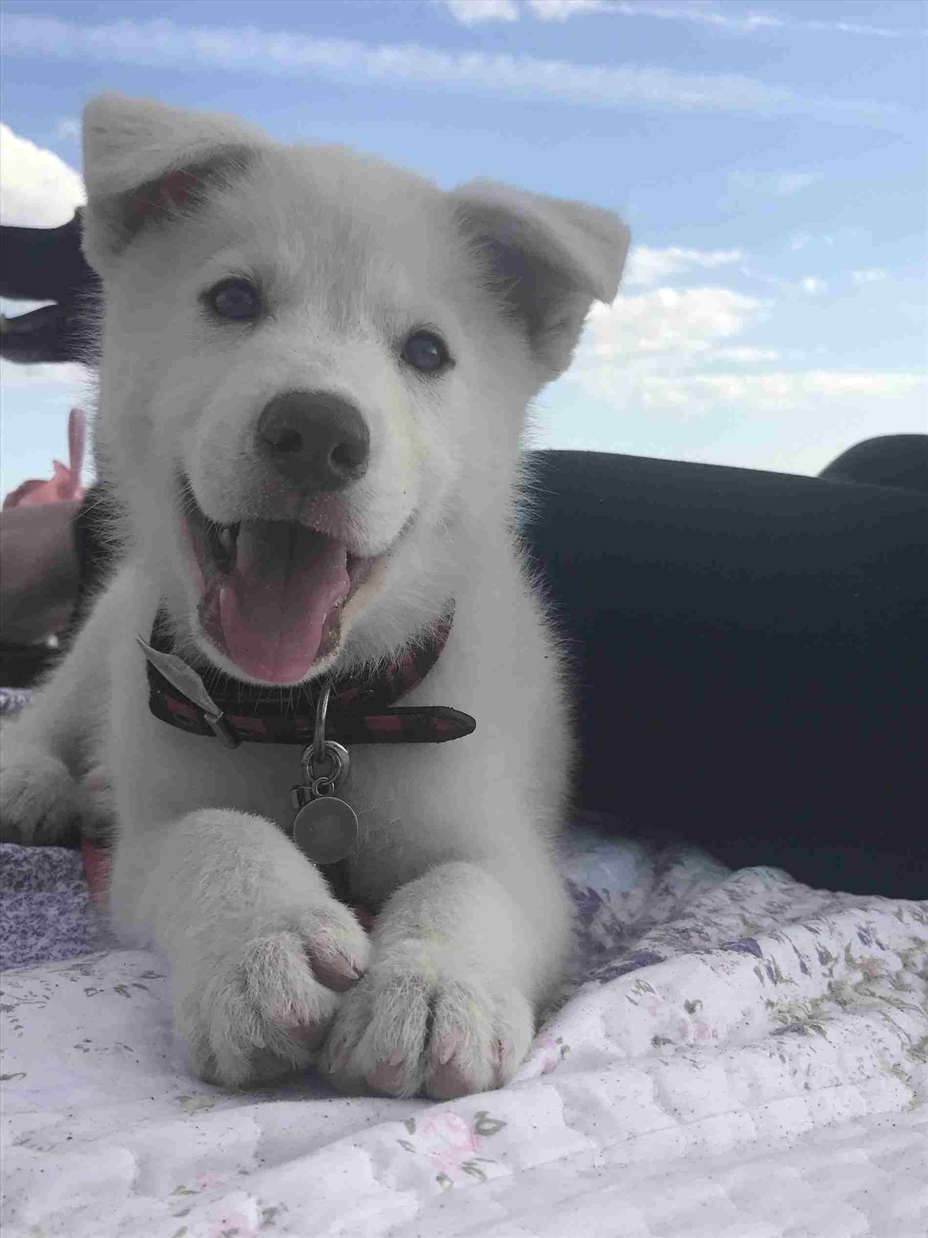 Newborn Husky Mix Puppies Cute Husky Wallpapers Desktop 4k Full