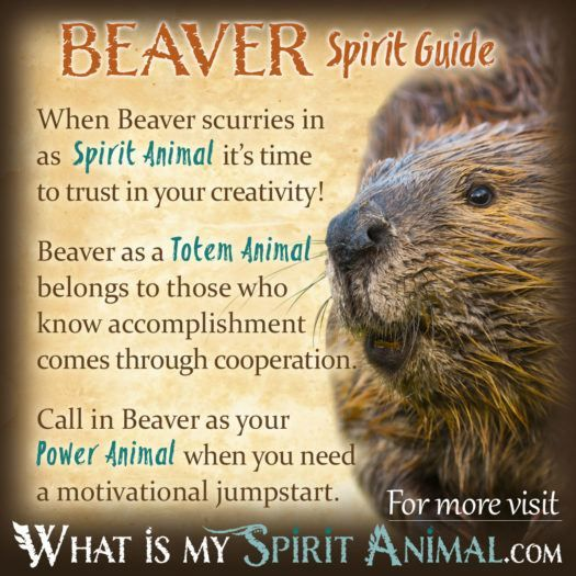 Native American Animal Symbols Meanings Power Animal Totems And
