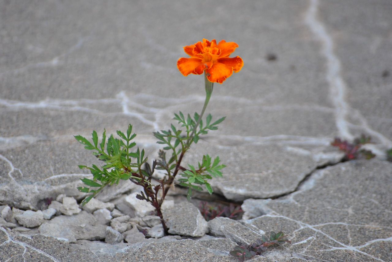 Image result for pics of flowers growing in concrete