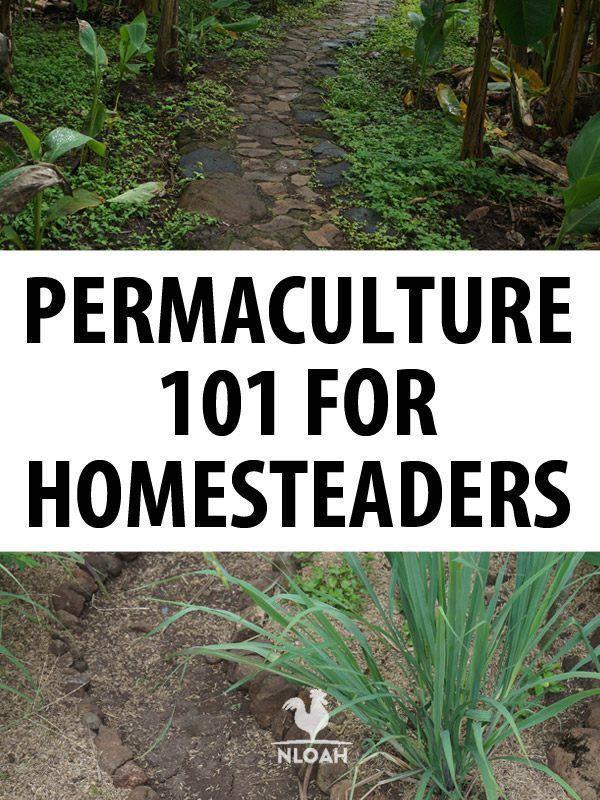 Permaculture landscaping permaculture landscaping