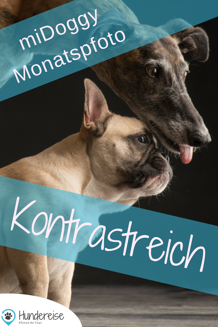 Monatspfoto September Kontrastreich Hunde Hunde Fotos Hundefotos