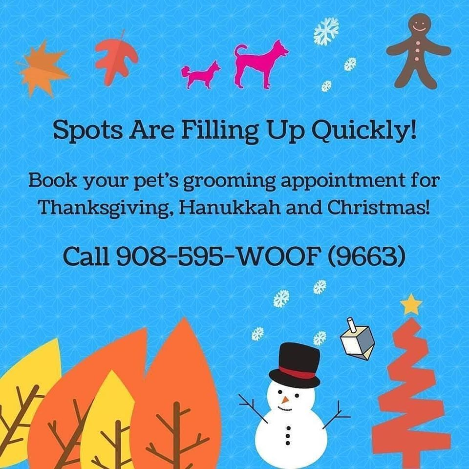 Call 908 595 9663 To Book Your Pets Grooming Appointment Today