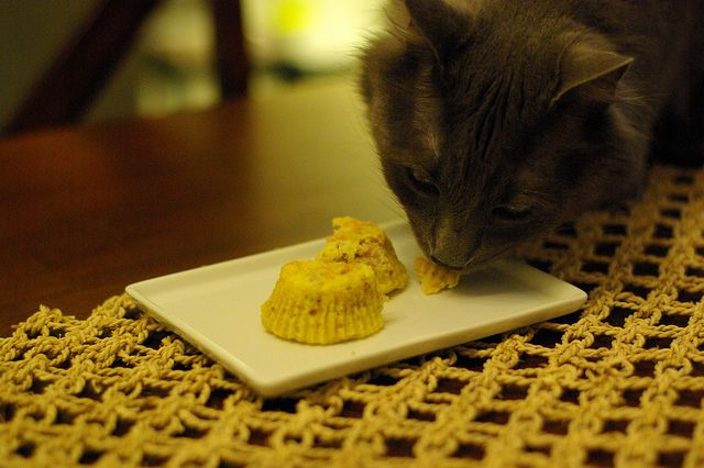 Easy tuna birthday cupcakes for cats Our fur babies