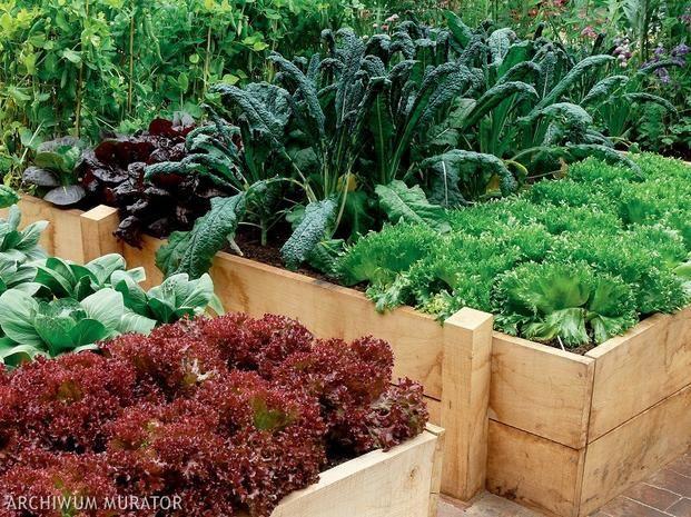 Interesujacym Pomyslem Na Urzadzenie Ogrodka Warzywnego Jest Warzywnik Na Podwyzszonej Grzadce Podpowiadamy Jak Zalozyc W Edible Landscaping Plants Succulents