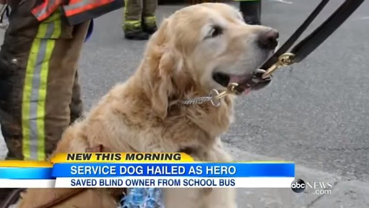 Dog Who Jumped In Front Of Bus To Save Owner Comes Home Service