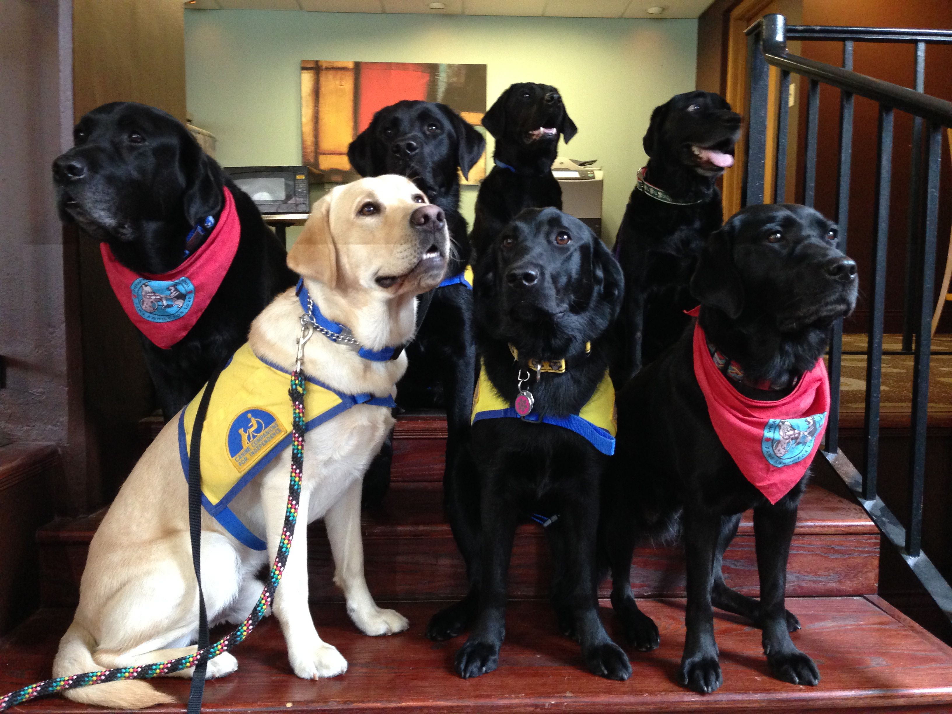 """Here, this group demonstrates """"sit"""" and must remain in this position until given their next command. They are all pros so no problems here. We were in a public space at Capitol University."""
