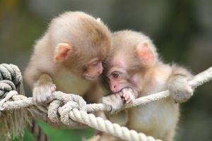 Monkeys are my fave animal