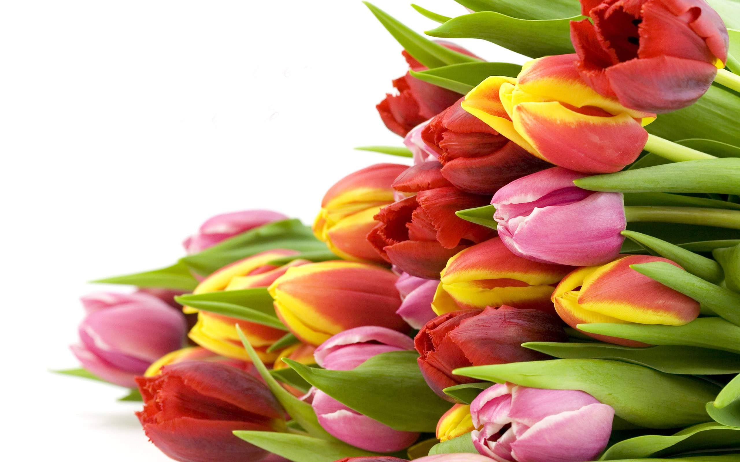 Flowers Hd Red Pink Yellow Tulips Download X Px