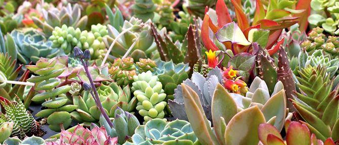 Super Succulents!